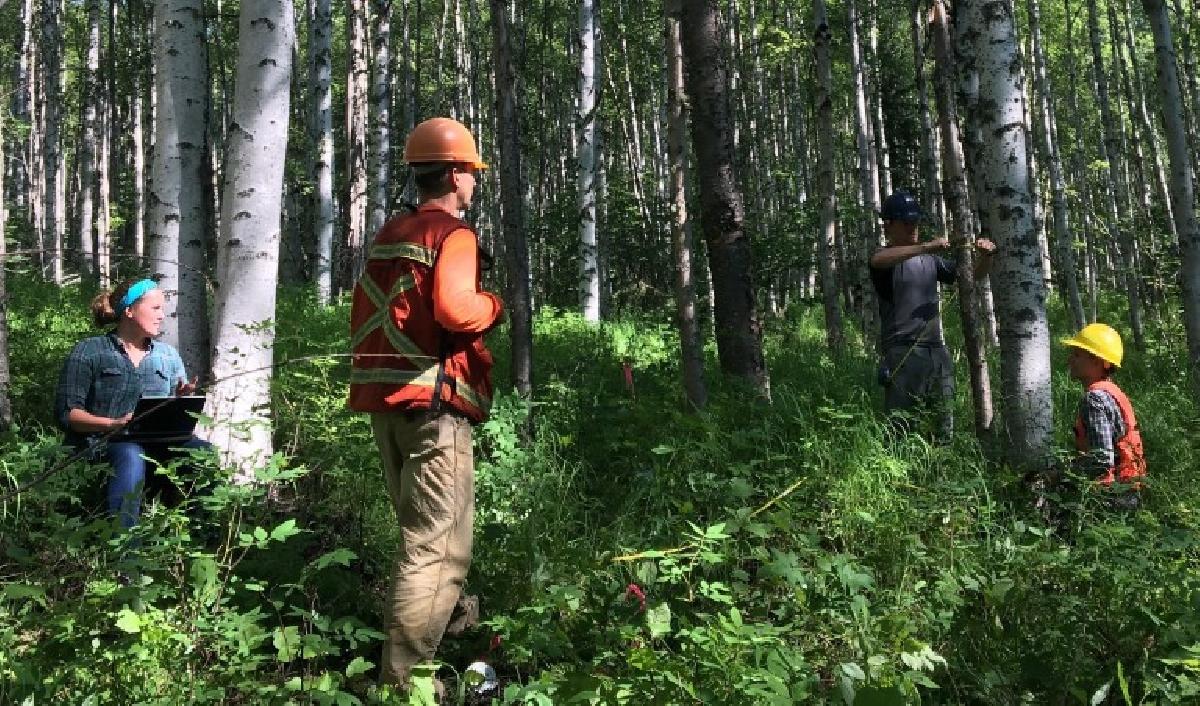 Inventário Florestal – O que é e como fazer - Ecovery - Soluções Ambientais